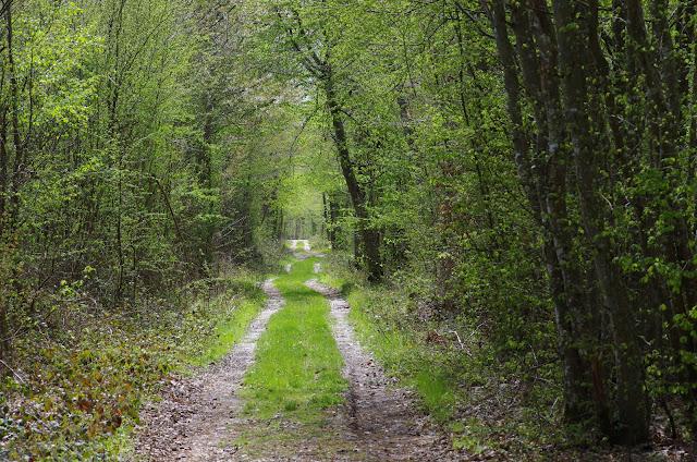 L'allée forestière, le 20 avril 2012. Les Hautes-Lisières (Rouvres, 28). Photo : J.-M. Gayman