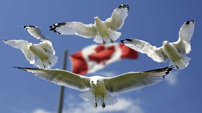 الهجرة إلى مقاطعة ساسكتشوان الكندية 2021