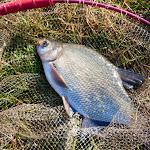 20140624_Fishing_BasivKut_021.jpg