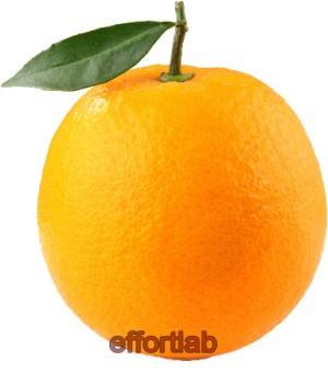 buah-oren
