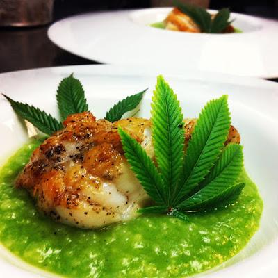 Monkfish on a Cannabis Epazote Pesto