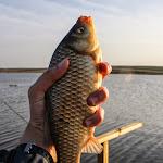 20140404_Fishing_Prylbychi_042.jpg