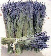 Photo: Lavender. Photo credit Log House Plants