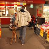KNON-honden in Emmen - DSC_0792.JPG