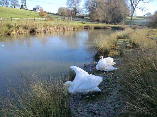 CIMG5017 Treading warily past the denizens of Ockhams pond