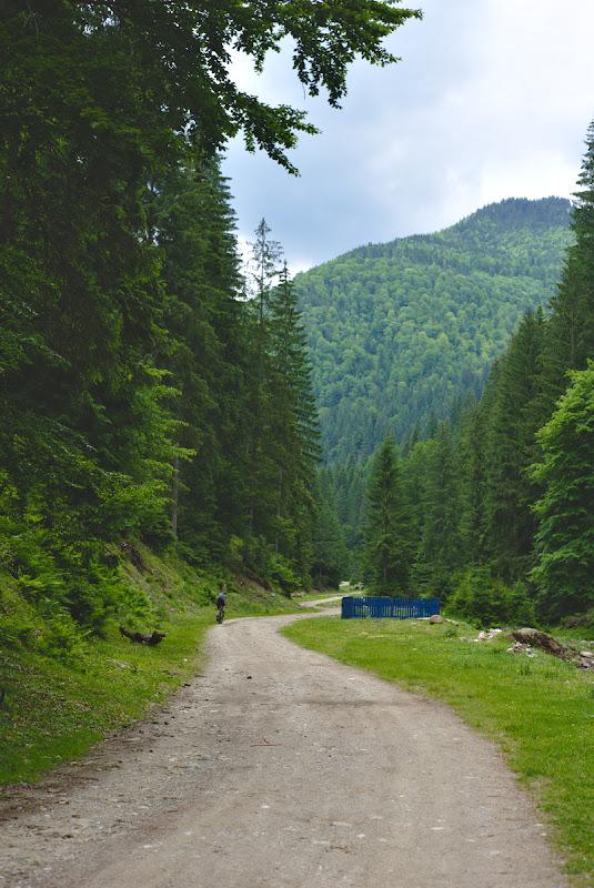 Pedaland cu spor pe valea Cobaselului, pe un forestier improbabil ce avea sa ne scoata pana la Refugiul Curatel.