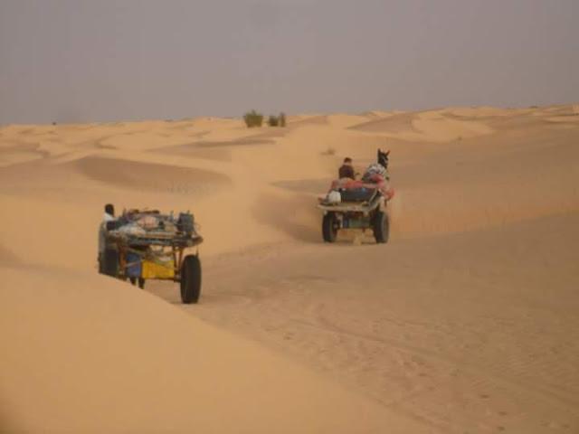 الصحراء التونسية و اشهر دليل صحراوي في تونس عبد الرحمن بن ابراهيم