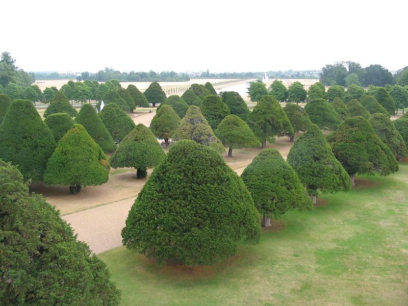 Krzewy w Hampton Court