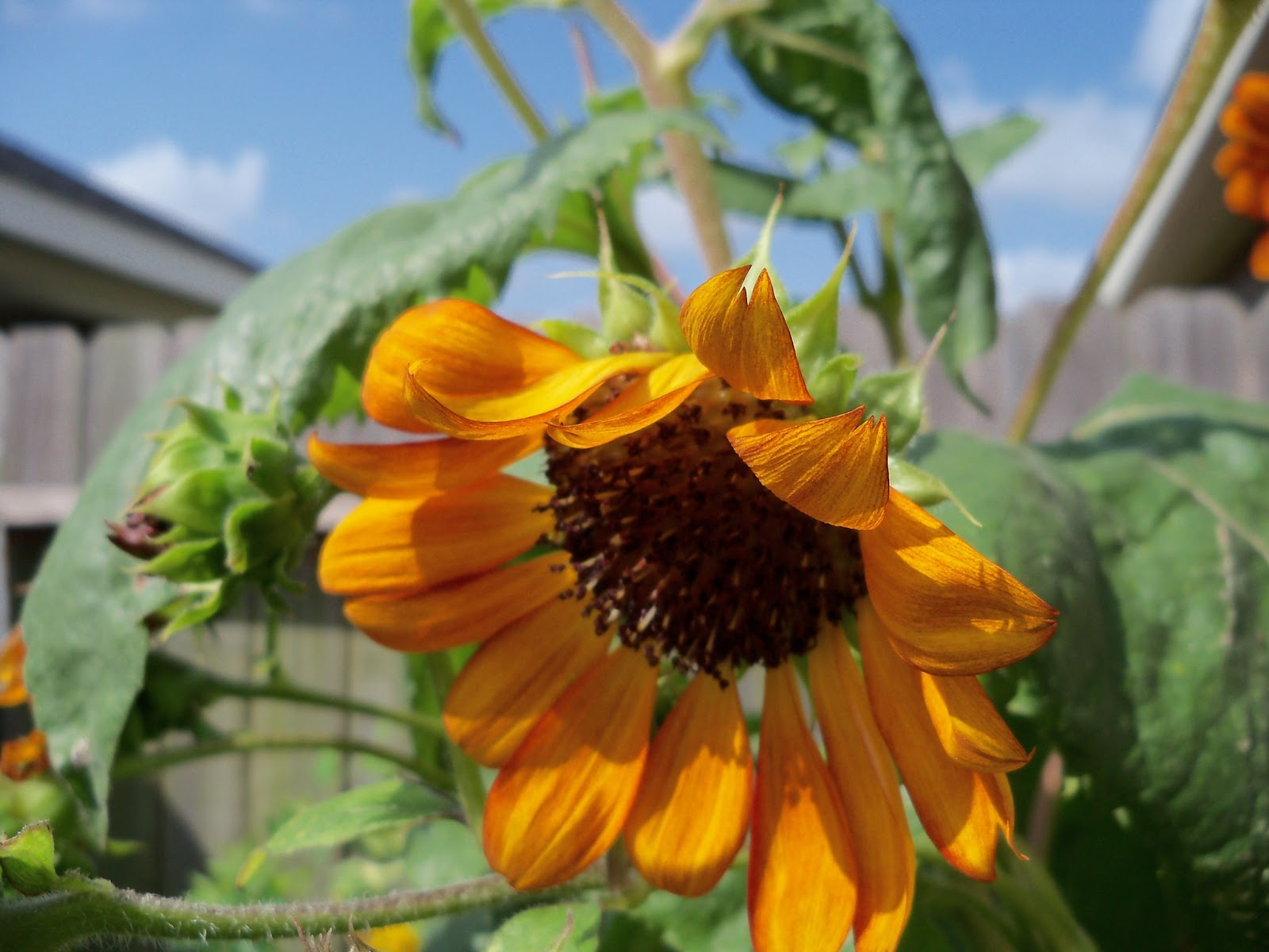 Gardening 2011 - 100_0152.JPG