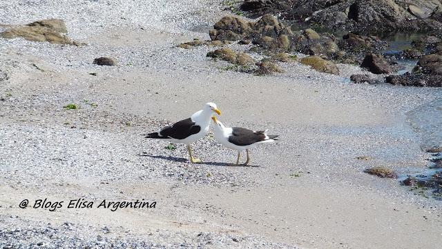 Juan Salvador Gaviota, Bach, Gaviotas en Punta del Este, Uruguay,  Elisa N, Blog de Viajes, Lifestyle, Travel