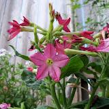 Gardening 2011 - 100_7734.JPG