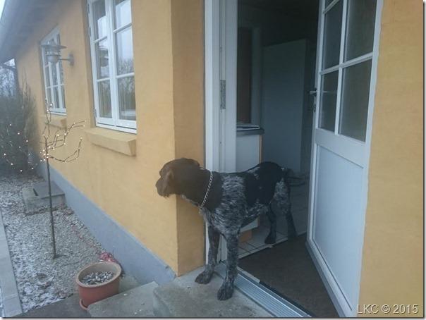 ventende hund 160116