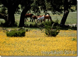 Texas Hill Country 004