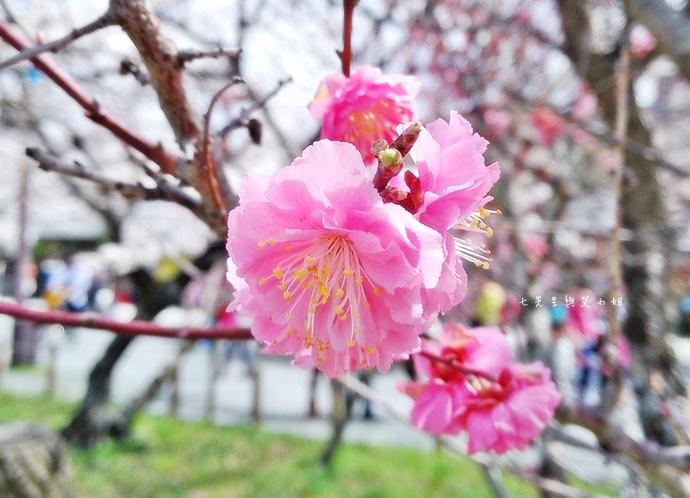 21 京都 嵐山渡月橋 賞櫻 櫻花 Saga Par 五色霜淇淋 彩色霜淇淋