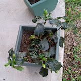 Gardening 2010 - 101_0968.JPG