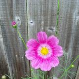 Gardening 2010 - 101_1588.JPG