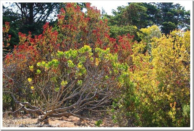 160813_UCSC_Arboretum_111