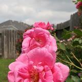 Gardening 2012 - IMG_3758.JPG