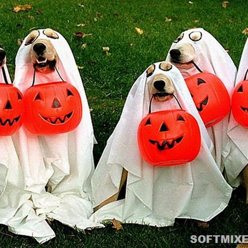 25 костюмов для собак на Хэллоуин