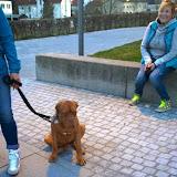 2015-04-07 Hundeschule Immenreuth On Tour in Marktredwitz im Auenpark - Marktredwitz%2B%252813%2529.jpg