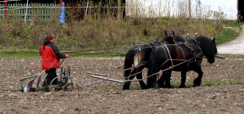Sana agricoltura di MORENO ANTOGNOLI