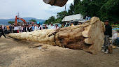 20140823三友会御柱の木造り - 1