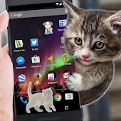 Cat on Phone Screen. Prank your friends