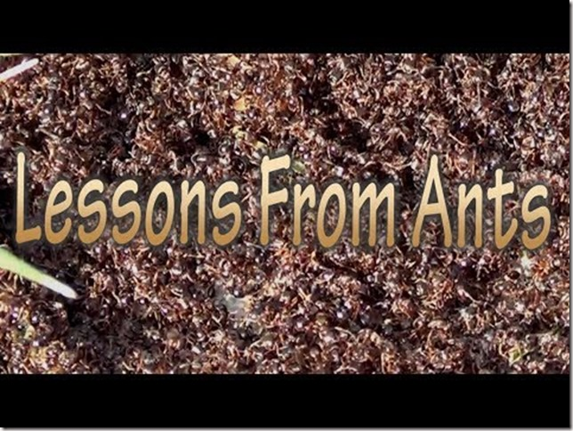 ant lessons