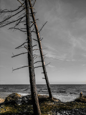 "1. plads november 2018, foto: Dorte Truelsen. Tema: ""Et træ""."