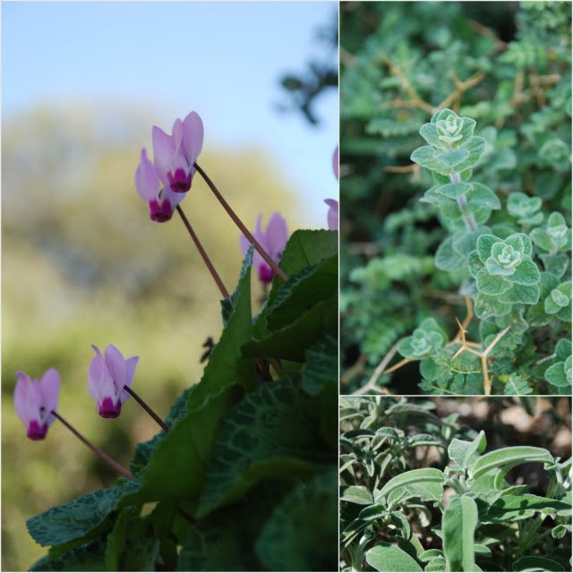 edible wild plants in Israel