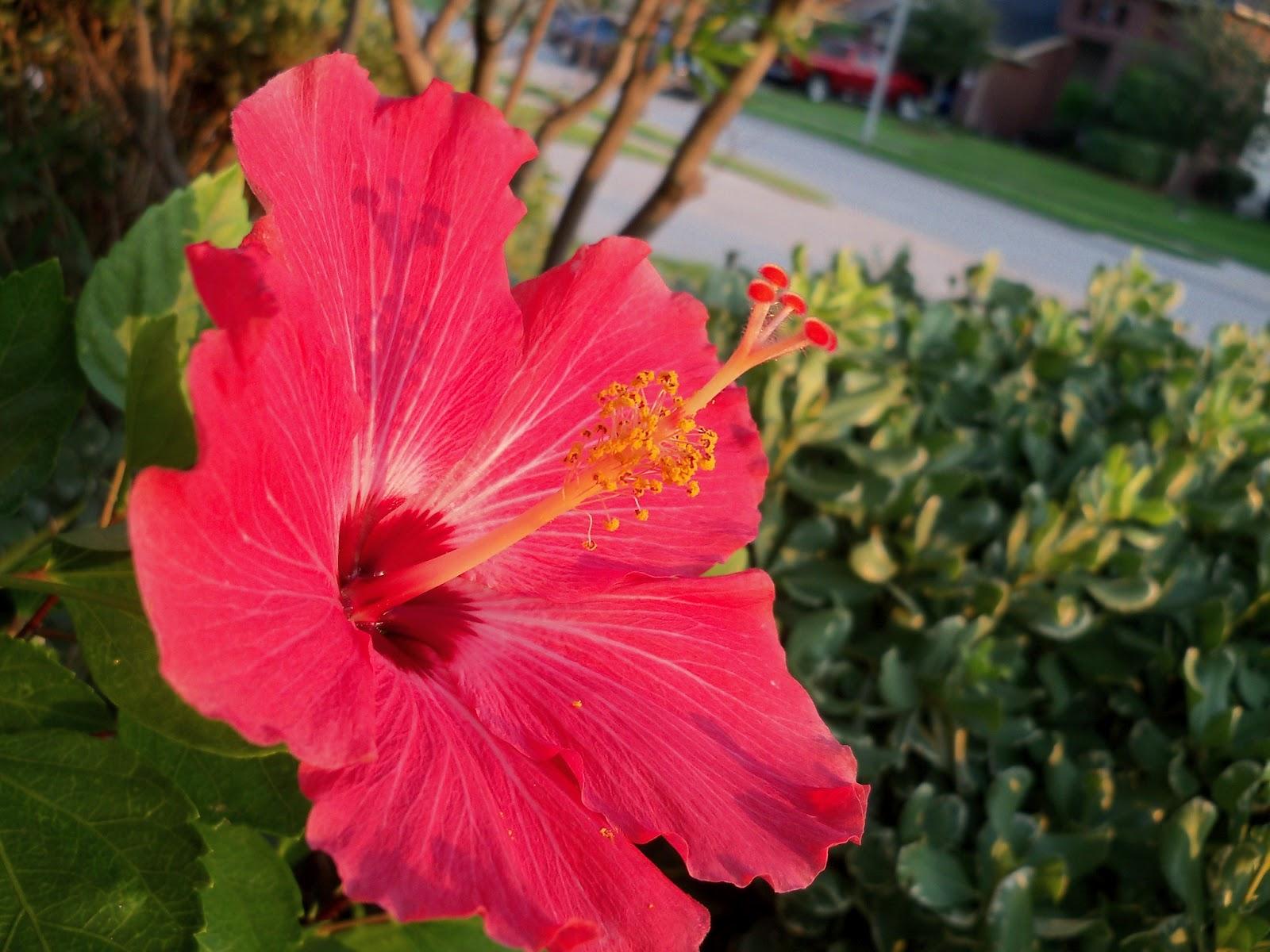 Gardening 2012 - 115_1902.JPG