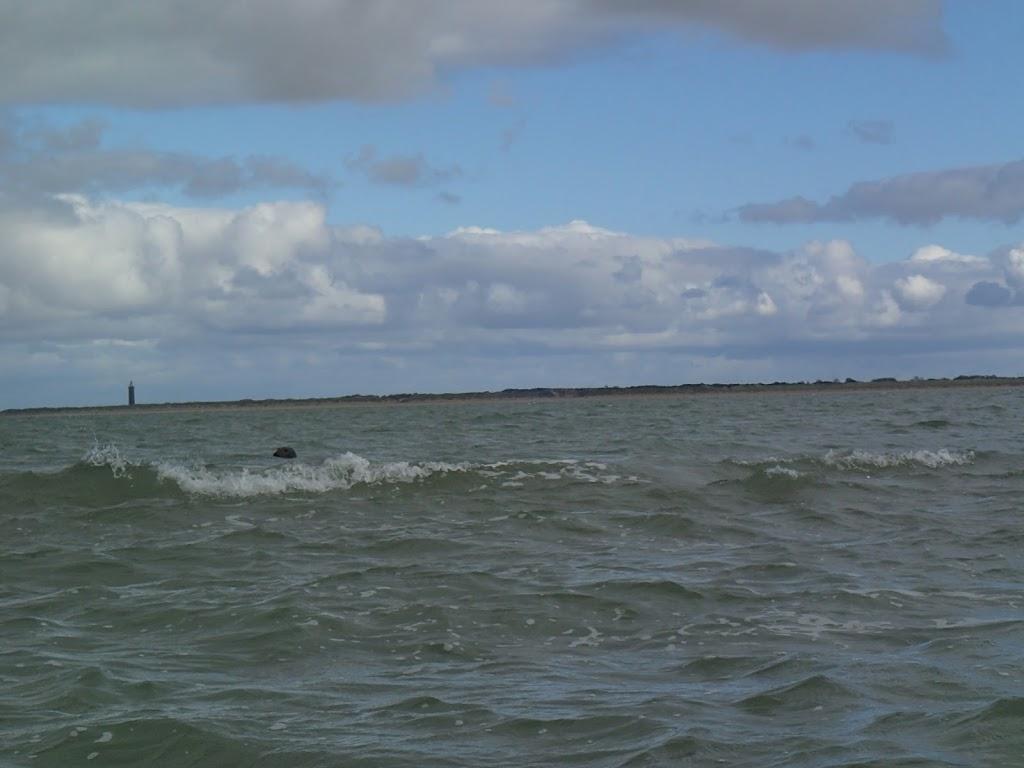 Kano Rijnland 2012 Zeekajakken Zeeland - 20121006%2BZeekajakken%2B%252815%2529.JPG