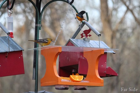 Orioles three