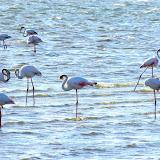 Flamingos on Wolvis Bay
