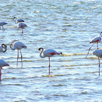 Flamingos on Wolvis Bay