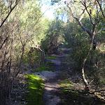 Dense vegetation (157423)