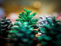 02 Kerek erdő.jpg
