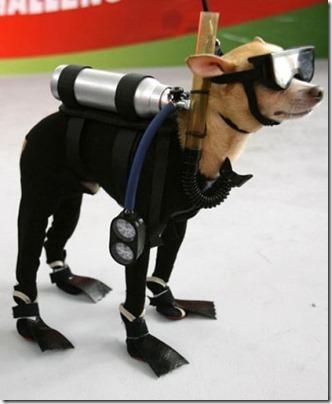 disfraces divertidos para perros  (29)