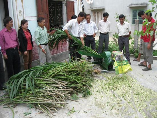 Tận dụng phụ phẩm nông nghiệp làm thức ăn cho Bò - 561845508ed78