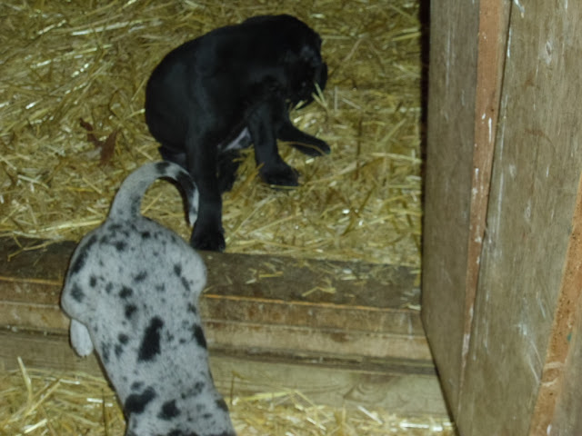 Gretta & Cobalt Blues 3/24/12 litter - SAM_3414.JPG