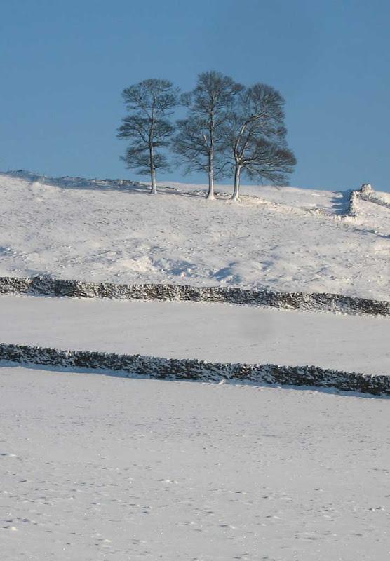 snow2010-11