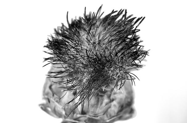 Fiore del Carciofo di Cperso