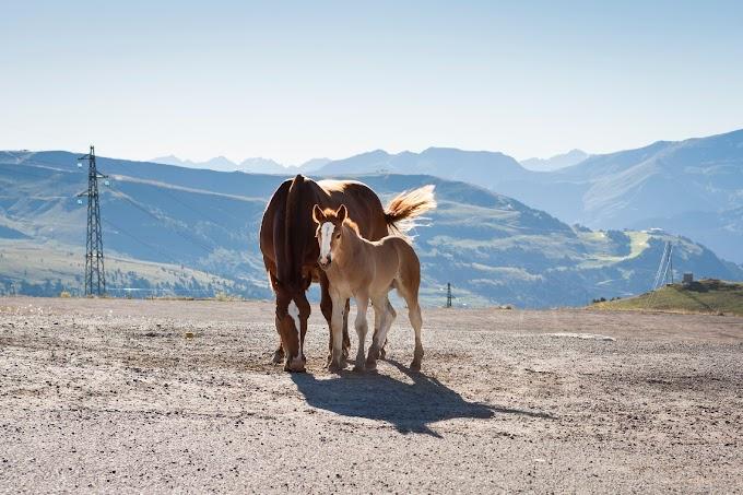 অ্যান্ডোরা ইউরোপের ছোট্ট সুন্দর দেশ সম্পর্কে কিছু জানা-অজানা তথ্য জেনে নেওয়া যাক। unknown facts about Little beautiful country Andorra