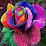 colorsoflife rosablanca (cloclo596)'s profile photo