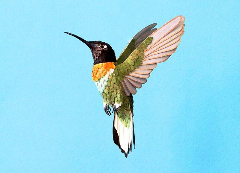 diana-beltran-herrera-birds-25