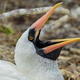 galapagos - Galapagos_FB_2-10.jpg