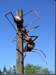 180511 019 Meat Ant Park Augathella