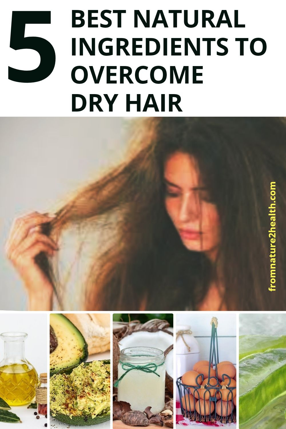 5 Best Natural Ingredients to Overcome Dry Hair : Egg, Coconut Oil, Avocado, Aloe Vera, Olive Oil