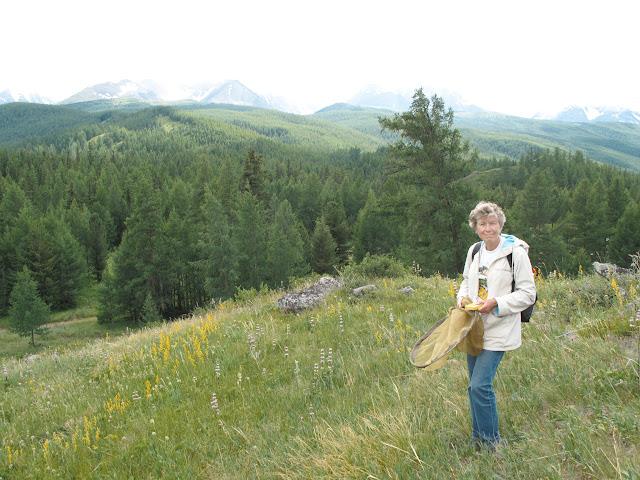 Aux environs de Nizhnekayancha : biotope de Parnassius (Parnassius) apollo alpherakyi KRULIKOWSKY, 1906. 2 juillet 2010. Photo : J. Marquet