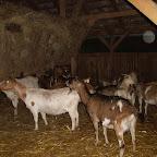 91_kecskefarm.JPG